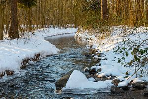 le waterloopbos avec une rivière en hiver