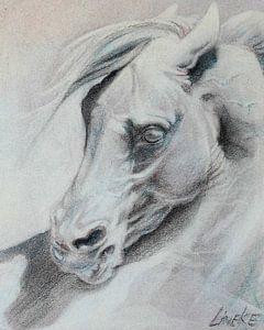 Klassiek Paardenhoofd
