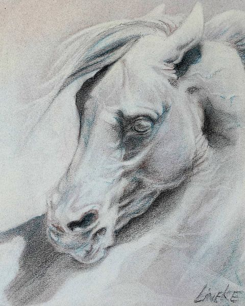 Klassiek Paardenhoofd van Lineke Lijn
