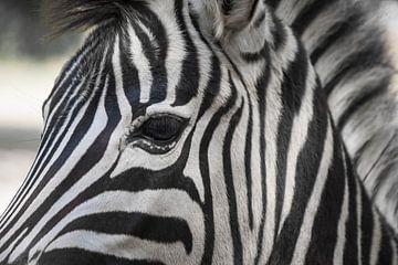 Door het oog van een zebra von Gerard Boerkamp