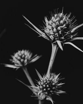 Schwarzweiß Bild Blumen von domiphotography