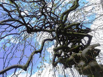Tree Magic 100 van MoArt (Maurice Heuts)