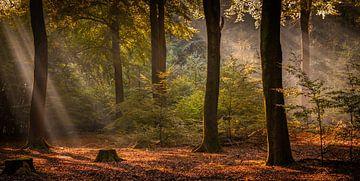 Zonnestralen in het bos van Arjen Noord