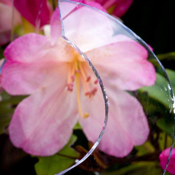 Scherf en bloei van Sybren Visser