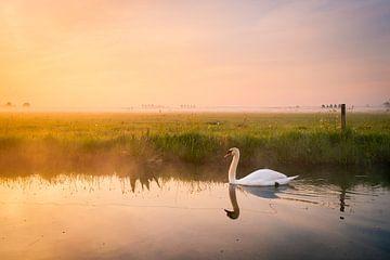 Schwan bei nebligem Sonnenaufgang   Landschaftsfotografie in den Niederlanden   Pastelltöne von Marijn Alons