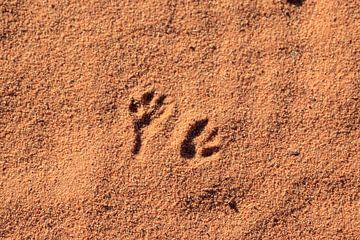 Sporen in de woestijn van Gerben Tiemens
