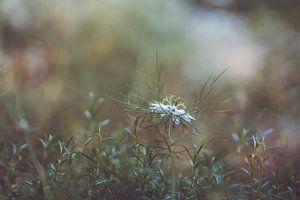 Blumen Teil 156 von Tania Perneel