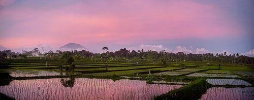 Roze zonsondergang over een rijstveld in Bali