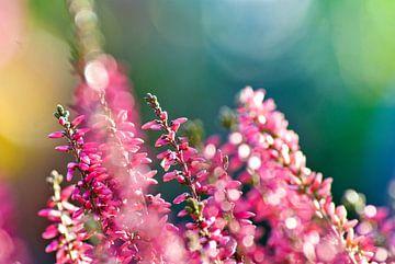 Roze bloemen von Marit Hilarius