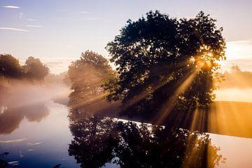 morning Dew sur Vione van Leeuwen