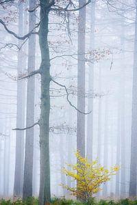 Mist in sprookjesbos van Francis Dost