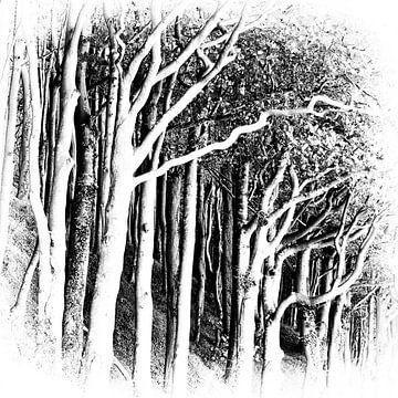 Küstenwald I von Kirsten Warner