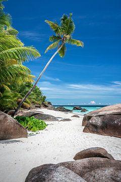 Plage tropicale avec palmiers aux Seychelles sur
