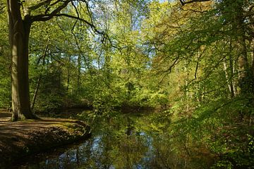 Bos in de lente sur Michel van Kooten