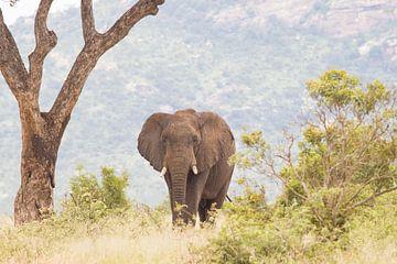 Afrikaanse olifant van Lenie de Boer