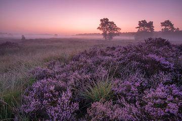 Sonnenaufgang in der Heide von Jacco van Son
