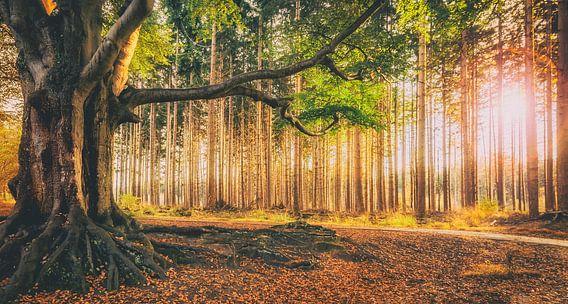 Bakkeveense bos in herfstkleuren tijdens ondergaande zon van Martijn van Dellen