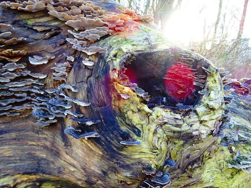 Tree Magic 106 - Elves Benches!