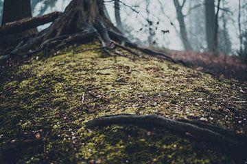 Eerie Forest van Meike Huibers