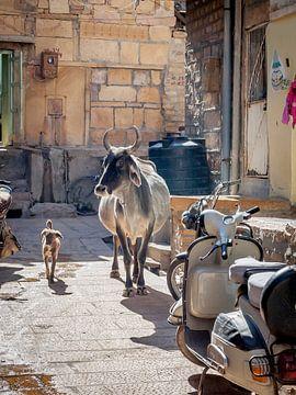 Koe en Hond maken een ommetje sur Jan de Vries