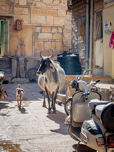 Koe en Hond maken een ommetje van