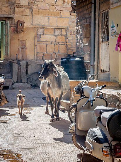 Koe en Hond maken een ommetje