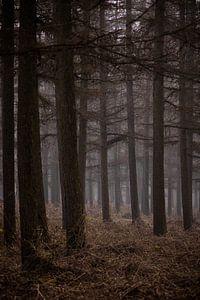 The woods V