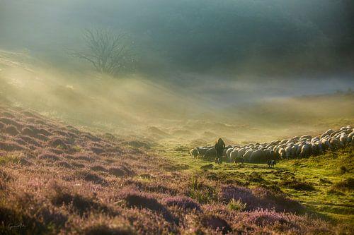 The Shepherds Guidance van