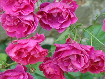 Bloemen van David Van der Cruyssen