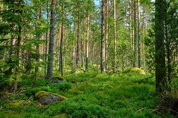 Zweeds landschap 011 sur