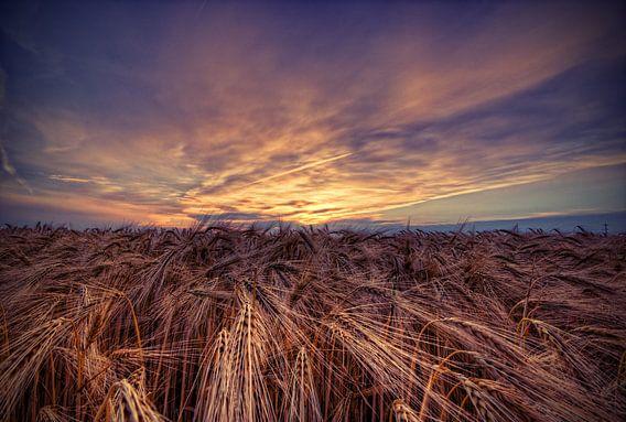 Feld im Sonnenuntergang van Malte Pott