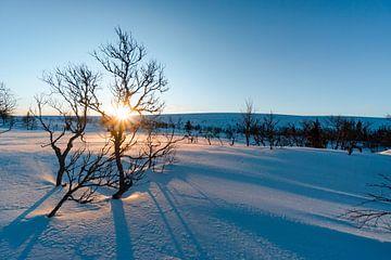 Zonsopgang in een betoverend winterlandschap van Leo Schindzielorz