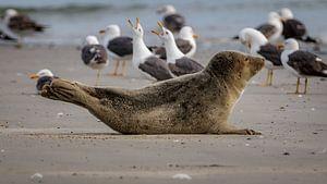 Zeehond met meeuwen