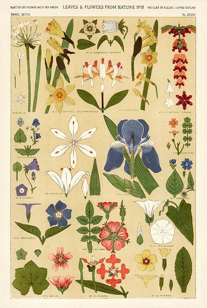 Owen Jones' berühmtes Werk Die Grammatik des Ornaments aus dem 19. Jahrhundert. Dieses Bild stammt a von 1000 Schilderijen