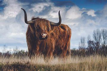 Schotse hooglander van Hendrik Jonkman