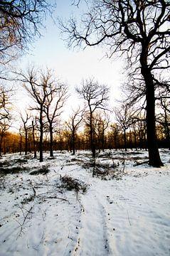Sneeuwvelden van