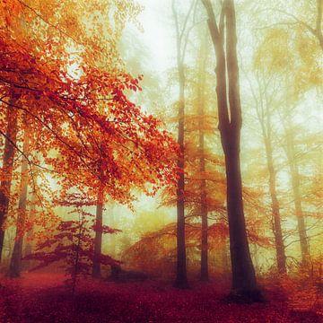 Dromerig herfstbos