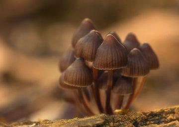 Groepje paddenstoelen van Jos Reimering