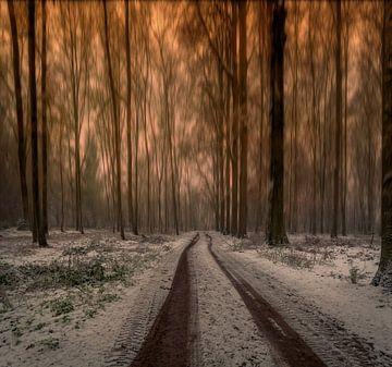 Long trees sur