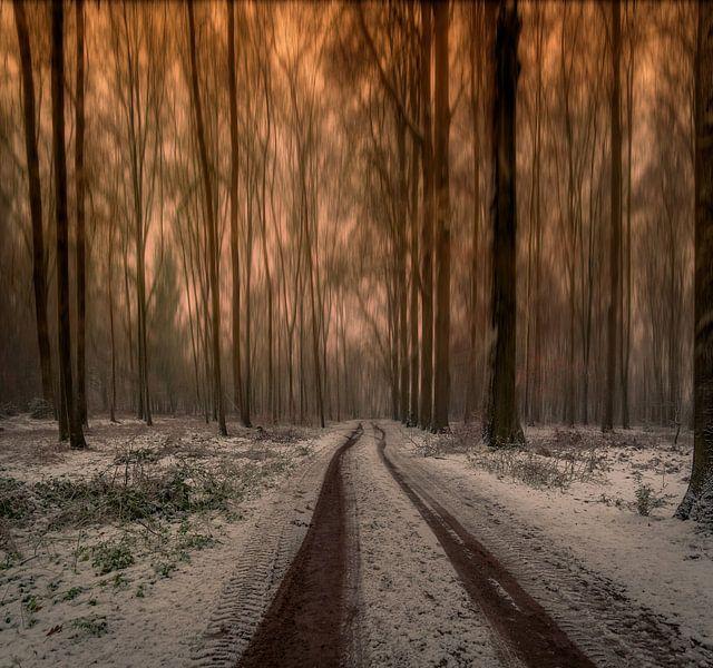 Long trees van Robin Pics
