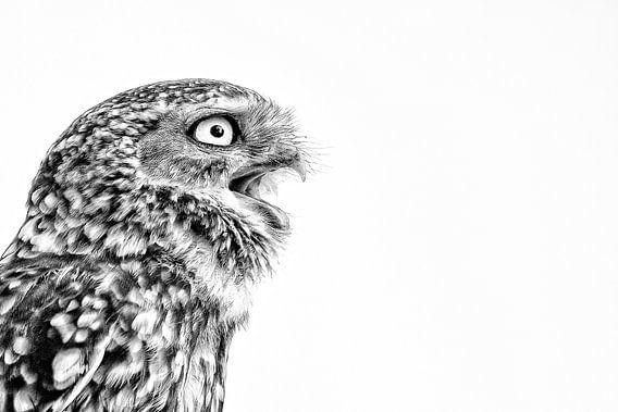 Angry bird van Kris Hermans