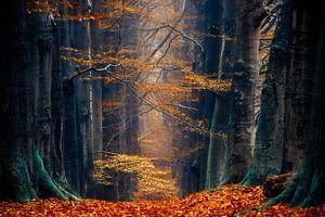 Herfst magie van Lars van de Goor