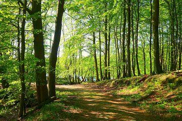 bos van