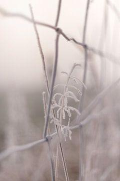 Einsamer Wintergrashalm auf der Wiese von Sandra Koppenhöfer