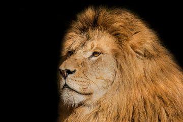 Leeuw, man. Portret. van Gert Hilbink