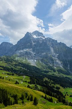 Bergkam Alpen van Nina Haverkamp