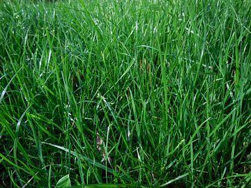 Groen is gras. van Maurice van der Horst