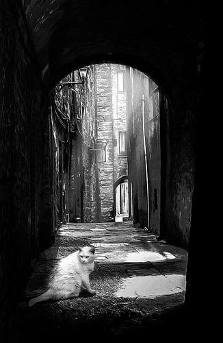 Een witte kat in een donkere steeg