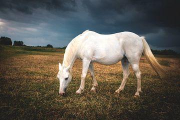 Paard in de weide net voor een flinke regenbui van Marco van den Arend