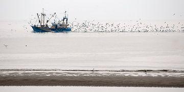 Vissersboot op de Waddenzee bij Texel, met zwermen meeuwen  von